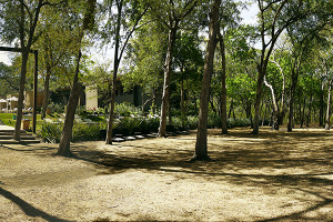 El Mangroove