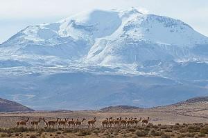 Alluring Chile