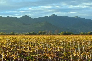 Chile Wine Trails Region