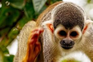 Peru - Amazon